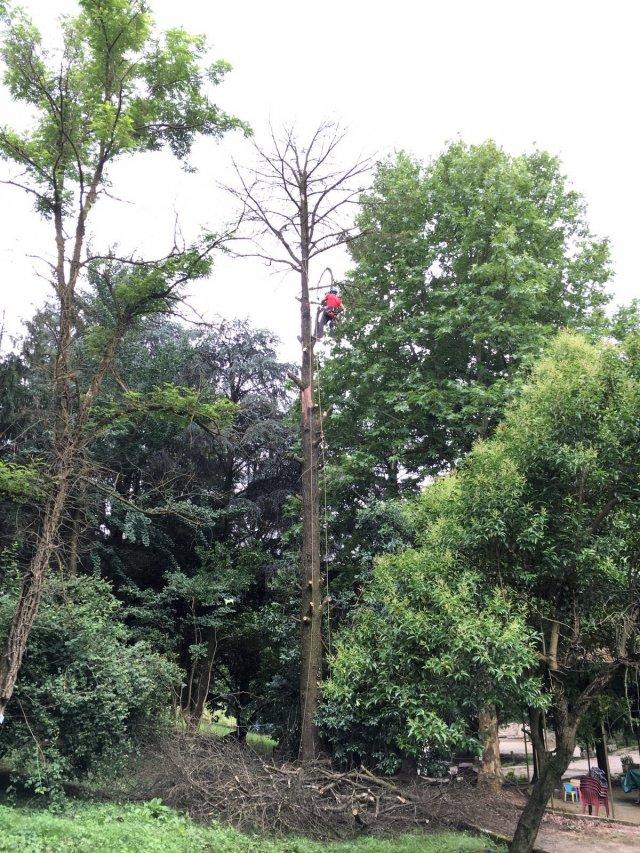 Abbattimento di un Albero in Tree Climbing al Parco Lonzina