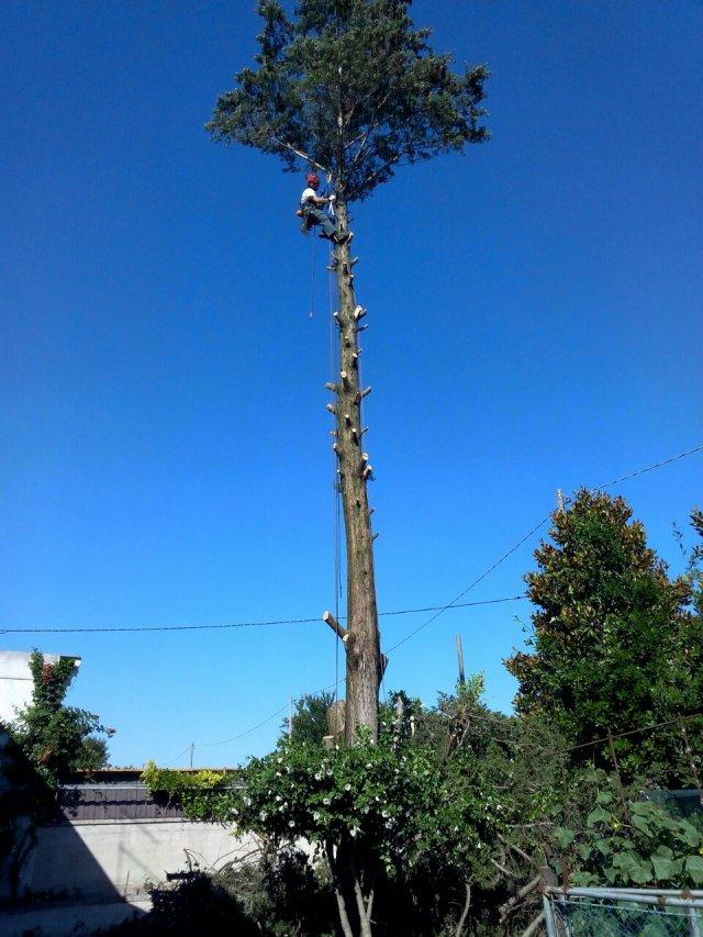 Treeclimbing (solo foto)