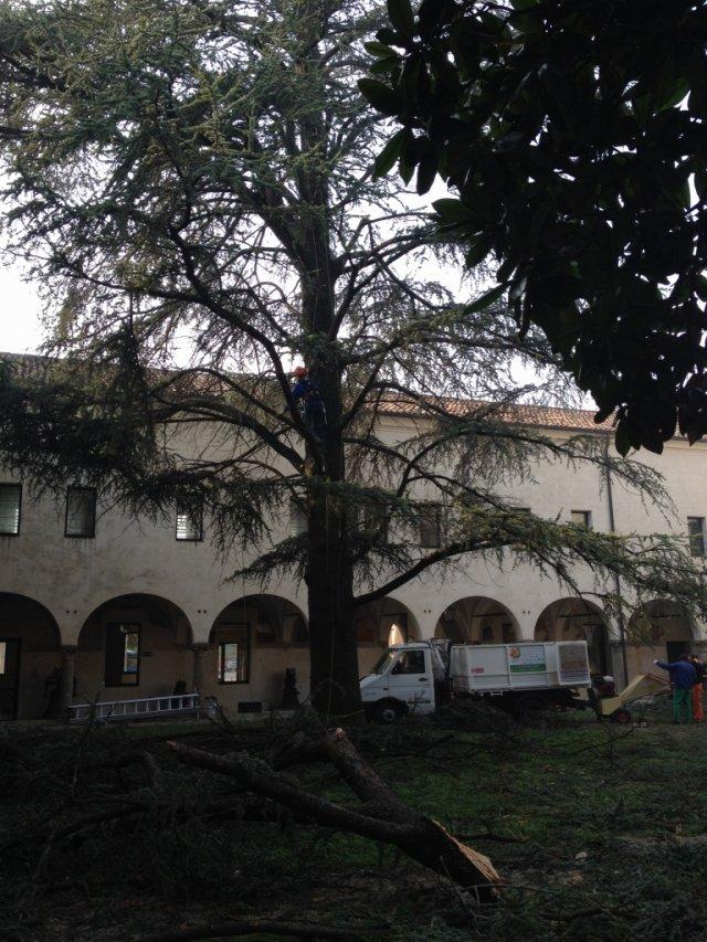 Ripristino patrimonio arboreo presso Fondazione Accademia Artigianato ad Este (Padova)