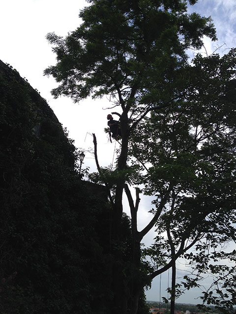 """Abbattimento esemplari arborei pericolanti in località """"Sette Chiesette"""" a Monselice"""
